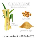 superfood sugar cane vector set.... | Shutterstock .eps vector #320444573