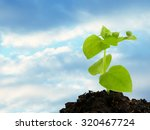 green seedling growing from... | Shutterstock . vector #320467724