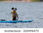 Puppy Dog Enjoying A Sup Ride...