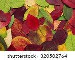 Bright Autumn Leaves ...