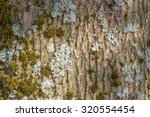 Nice Tree Bark With Moss And...