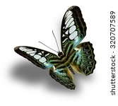 Stock photo beautiful blue and green butterfly the clipper butterfly upper wing profile flying up and present 320707589