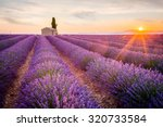 Provence  Lavender Field At...