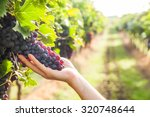 grape harvest | Shutterstock . vector #320748644