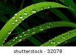 Rain Drops On The Leaf Of A...