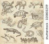 animals around the world  ... | Shutterstock . vector #320803259