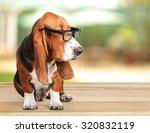 Stock photo dog 320832119