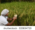 indian farmer counting money in ... | Shutterstock . vector #320834720