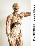 part of human body model with... | Shutterstock . vector #320840288