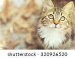 Stock photo autumn portrait of cute kitty 320926520