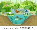 ecosystem of pond | Shutterstock .eps vector #320963918