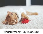 Stock photo cute little ginger kitten wearing warm knitted sweater is sleeping with pet toy on white carpet 321006680