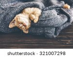 Stock photo cute little ginger kitten is sleeping in soft blanket on wooden floor 321007298
