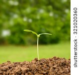 young plant new life. | Shutterstock . vector #321020360