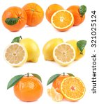 citrus collection | Shutterstock . vector #321025124