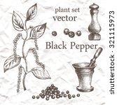 black pepper plant set. hand...   Shutterstock .eps vector #321115973