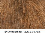 Brown Dog Fur Texture Or...