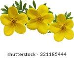Yellow Yellow Monrovia...