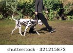 Stock photo a man in a sweater and pants walking outdoors with a dog breed dalmatian 321215873