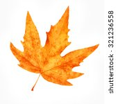 Dry Maple Leaf Isolated On...
