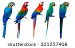 Set Of Beautiful Macaw Birds...