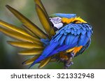 Portrait Of Blue And Yellow...