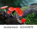 fungi cup red mushroom... | Shutterstock . vector #321419870