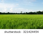 beautiful green rice filed and... | Shutterstock . vector #321424454