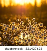 Cotton Grass On A Background O...