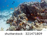 Colorful Coral Reef With Exoti...