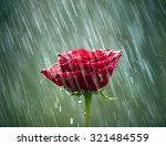 Red Rose Into The Rain. Shallow ...