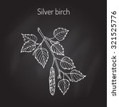 silver birch branch with green...   Shutterstock .eps vector #321525776