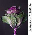 Kale Edible Flower Still Life...
