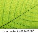 leaf texture | Shutterstock . vector #321675506