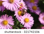 honey bee on a aster amellus... | Shutterstock . vector #321742106