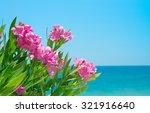 Oleander Flowers At The Beach....