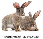 two brown rabbits isolated on a ... | Shutterstock . vector #321965930