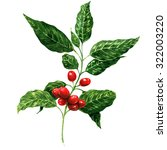 red coffee beans on branch ... | Shutterstock . vector #322003220