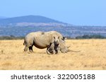 african white rhino  national... | Shutterstock . vector #322005188