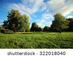lawn in the park grass trees | Shutterstock . vector #322018040