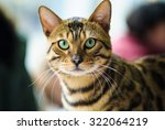 Stock photo funny cat 322064219