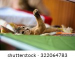 Stock photo funny cat 322064783