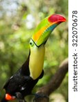 keel billed toucan looking up... | Shutterstock . vector #322070678