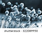 Cotton Grass On The Lake On A...