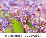 a macro shot of some hydrangea... | Shutterstock . vector #322292894