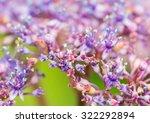a macro shot of some hydrangea... | Shutterstock . vector #322292894