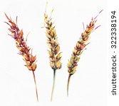 The Ripe Ears Of Wheat Drawn...