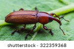 scarab on green leaf background | Shutterstock . vector #322359368