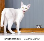 Stock photo funny evil white cat with open mouth funny crazy cat mad cat 322412840