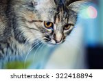 Stock photo funny cat 322418894